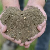 Wildflower Soil