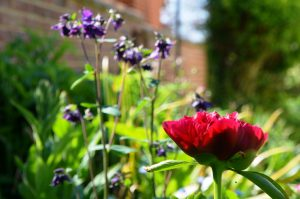 Garden looking good too!
